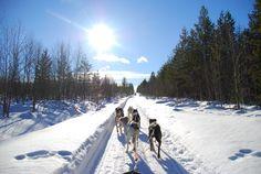 Lapland: op pad met de husky's! Finland, Husky, Outdoor, Outdoors, Outdoor Games, Outdoor Life, Husky Dog