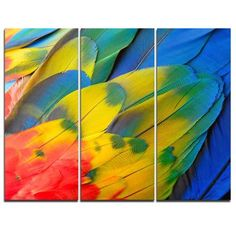 DesignArt Scarlet Macaw Feathers - 3 Piece Graphic Art on Wrapped Canvas Set