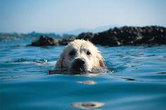 cani-amano-acqua-nuotare-ergoflex