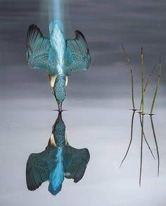 Pretty Birds, Beautiful Birds, Animals Beautiful, Wow Photo, Photo Animaliere, Wildlife Photography, Animal Photography, Amazing Photography, Ocean Photography