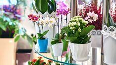 Kwiaty doniczkowe – pielęgnacja bez chemii. 10 domowych sposobów