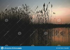 Photo about Natural gravel lake. Photographed at sunset. Slovakia. Image of interest, famous, floodplain - 214471842 Stock Photos, Sunset, Natural, Plants, Image, Art, Art Background, Kunst, Sunsets
