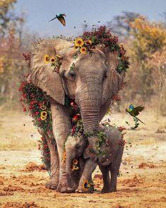 Photo Elephant, Elephant Love, Elephant Art, Mama Elephant, Wild Life, Cute Baby Animals, Animals And Pets, Safari Animals, Nature Animals