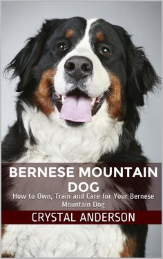 Bernese Mountain Dog: How to Own, Train and Care for Your Bernese Mountain Dog:Amazon:Kindle Store