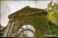 Alter St. Matthäus-Friedhof (Sept 2017) #Berlin #Schöneberg #Deutschland #Germany #biancabuergerphotography #igersgermany #igersberlin #IG_Deutschland #IG_berlincity #ig_germany #shootcamp #pickmotion #berlinbreeze #diewocheaufinstagram #berlingram #visit_berlin #canon #canondeutschland #EOS5DMarkIII #5Diii #Friedhof #cementary #travel #sightseeing #biancabfoco
