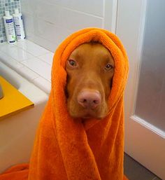 The water was too cold!!! And that shampoo, Smell bad!!! Don't ask me to do it again!!!