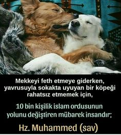 Muhammed Sav, Islam Quran, Cool Words, Pets, Did You Know, Allah, Istanbul, Religion, Animals