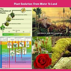 Evolution has produced a range of plants from the earliest algal mats to bryophytes (mosses liverworts and hornworts) lycopods ferns and the complex gymnosperms and angiosperms of today. All plants share a common ancestor - a green algae that belonge