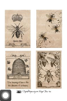 Queen Bee picture, would make an excellent tattoo- picture via etsy.