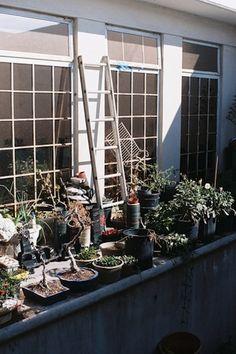 Sharlene Garcia interview, #photography by Dagoberto Martinez #gardening