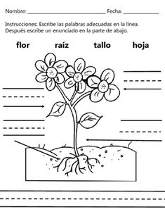 Plant Parts Partes De Una Planta Dual Language English Spanish Teachers Learning Plant Science First Grade Science