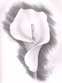 Trendy Flowers Black And White Art Inspiration Flower Sketch Pencil, Pencil Drawings Of Flowers, Pencil Drawing Tutorials, Flower Sketches, Pencil Art Drawings, Drawing Sketches, Drawing Flowers, Realistic Flower Drawing, Shading Drawing