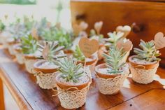 [New] The 10 Best Home Decor Today (with Pictures) Succulent Favors, Succulent Bouquet, Wedding Favours, Wedding Gifts, Trendy Wedding, Our Wedding, Wedding Table, Rustic Wedding, Diy Wedding Lighting