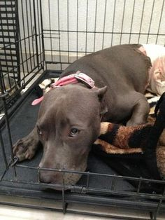 Baja SAFE is now sponsoring Baby Blue 100% as the boy or the family cannot afford it. That is what our organization is about, helping the families and their pets and educated them at the same time.She will have a full recovery and we will keep you inform. There are still great compassionate people out there!!!