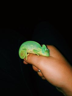 The Effective Pictures We Offer You About Insects for kids A quality picture can tell you many things. Baby Chameleon, Veiled Chameleon, Chameleon Care, Chameleon Tattoo, Cute Reptiles, Reptiles And Amphibians, Cute Creatures, Beautiful Creatures, Chameleon Enclosure