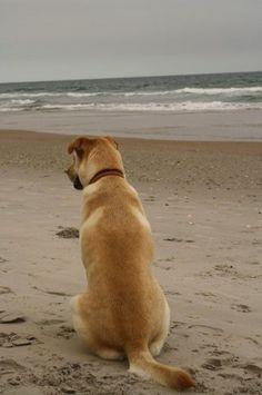 3 Dog Friendly Beaches in North Carolina. | Dog Friendly