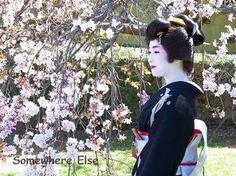 Sakura Matsuri festival, Cowra NSW in September. I am going this year.