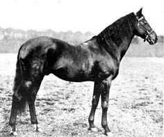 St. Serf Great (x17) Grandsire (Sires Side) 1887