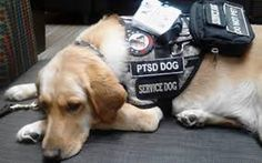 ptsd dogs - Google Search