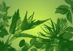 32 Ultra Photoshop Quality Leaf Brushes