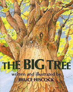 The Big Tree by Bruce Hiscock https://www.amazon.com/dp/1563978105/ref=cm_sw_r_pi_dp_x_wER5ybAYK85VA