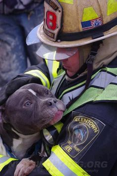 Compassion...with no discrimination. Thank you, Assistant Chief Christopher Kiskeravage of Allentown, PA, for saving this precious FAMILY dog from a three alarm fire.