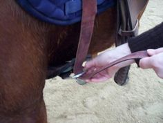 How to Tie a Western Cinch: A Photo Guide: Tie a Western Cinch - Pull Up the Cinch Strap