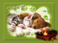 Good Night, Cats, Animals, Nighty Night, Gatos, Animales, Animaux, Animal, Cat