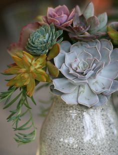 I love this succulent bouquet! Too bad I have the ability to kill even easy going plants like these.