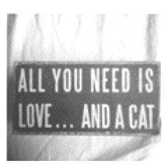 bought this for my mom for mothers day! Favorite Quotes, Best Quotes, Awesome Quotes, Quotes Quotes, Favorite Things, Crazy Cat Lady, Crazy Cats, All You Need Is Love, My Love