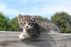There are even barn kittens! | 29 Photos Of The Most Adorable Farm On Earth