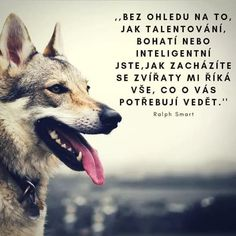 Jokes Quotes, Life Is Good, Animals, Style, Pictures, Swag, Animales, Husky Jokes, Life Is Beautiful