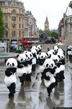 Panda Awareness Week 2012 reigns In Central London