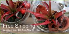 Free shipping on orders over $75 at Brooklyn Botanic Garden's gift shop, from now until December 18, 2013! Stock up on your holiday gifts now. #christmas #holidays #gifts