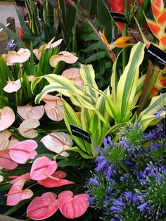 Free Plant Identification Tropical Plants and Flowers – Be sure to visit Garden… – Landscaping Backyard Simple Garden Designs, Tropical Garden Design, Tropical Backyard, Tropical Landscaping, Landscaping Rocks, Tropical Flowers, Exotic Flowers, Tropical Plants, Beautiful Flowers