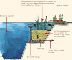 You Need To Know About Natural Swimming Pools natural swimming pool cross section plan view regeneration plant root zone designnatural swimming pool cross section plan view regeneration plant root zone design Rectangular Pool, Round Pool, Garden Pool, Water Garden, Kidney Shaped Pool, Small Fountains, Pond Filters, Natural Swimming Pools, Swimming Ponds