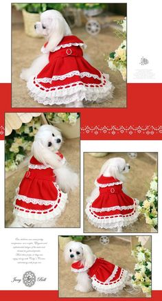 Lucia Designer Handmade fancy winter dress for Pets / Free Pet Fashion, Animal Fashion, Baby Dogs, Pet Dogs, Wonder Pets, Cute Dog Clothes, Crochet Dog Sweater, Dog Wash, Dog Clothes Patterns