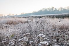 Winter border with Achillea, Monarda, grasses and Agastache 'Black Adder' seed heads.Oudolf field, Somersett