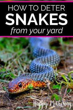 Learn how to deter snakes from your yard and garden with these tips and tricks. From keeping it clean and organized to getting a pet and everything in between, our advice will help keep snakes out of your yard and home. Chicken Coop Pallets, Diy Chicken Coop, Organic Gardening, Gardening Tips, Keep Snakes Away, Outdoor Projects, Diy Projects, Outdoor Decor, Portable Chicken Coop