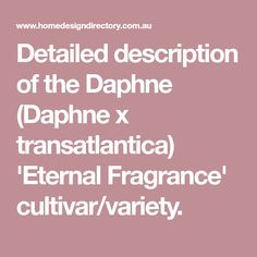 Detailed description of the Daphne (Daphne x transatlantica) 'Eternal Fragrance' cultivar/variety.