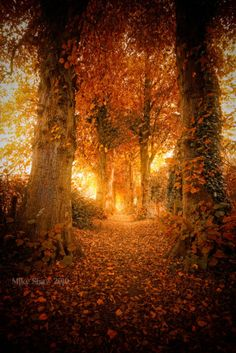 The post Beautiful Autumn Light. autumn scenery appeared first on Trendy. Autumn Day, Autumn Leaves, Autumn Forest, Autumn Walks, Autumn Song, First Day Of Autumn, Forest Light, Deep Autumn, Forest Path