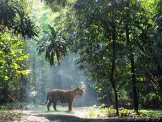 nature's spotlight by Irawan Subingar on 500px