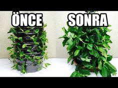 Nane Çöplerinden | Taze Nane Nasıl Elde Edilir ? - YouTube Herbs, Garden, Youtube, Balcony, Garten, Lawn And Garden, Herb, Gardens, Gardening