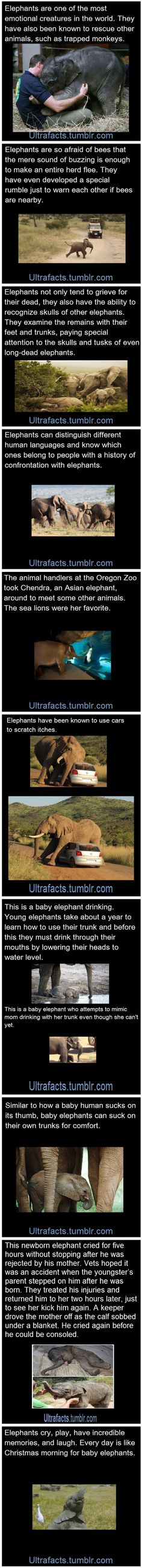 Elephants are seriously the cutes things ever!