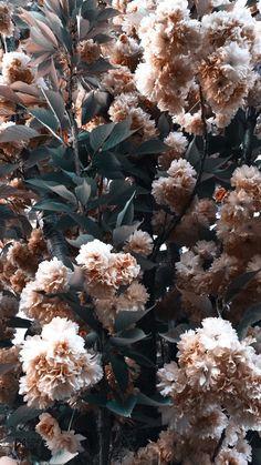 Aesthetic Light, Aesthetic Collage, Aesthetic Photo, Flowery Wallpaper, Plant Wallpaper, Tumblr Wallpaper, Wallpaper Backgrounds, Wallpaper Quotes, Aesthetic Iphone Wallpaper