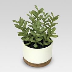 Find product information, ratings and reviews for Artificial Plant in White Pot Medium - Threshold™ online on Target.com. #affiliate