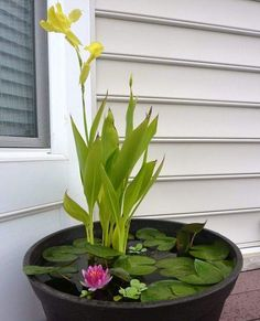 DIY Mini Rain Garden Pond | Easy DIY Garden Projects Anyone Can Do This Fall Season
