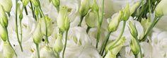 саката украсне биљке