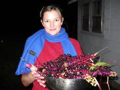 Dyeing with pokeberries, OMG, a use for those annoying plants that pop up all over thanks to the birds, LOL