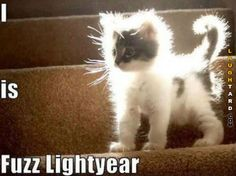 FuzzLightyear #lol #laughtard #lmao #funnypics #funnypictures #humor  #cats #funnycats #funnyanimals